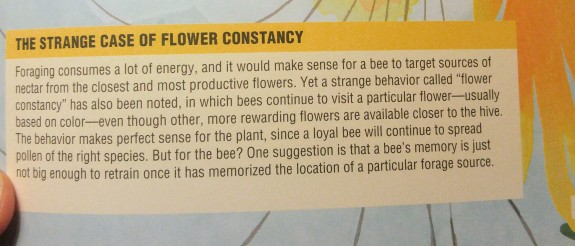 the bee book 3