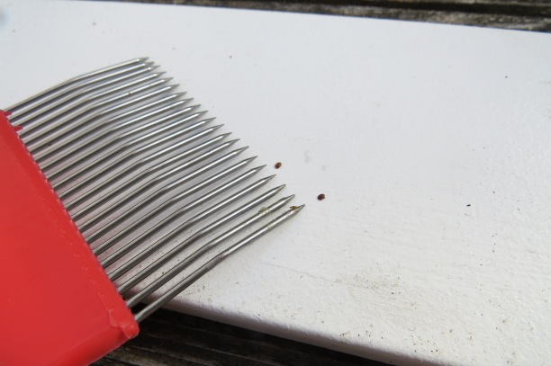 Varroa by Capping Fork