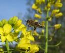 bee landing
