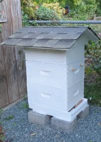 bee ventilation roof 6