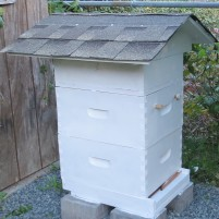 bee ventilation roof 6