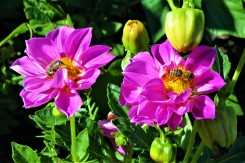sept bees 03 2