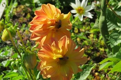sept bees 04