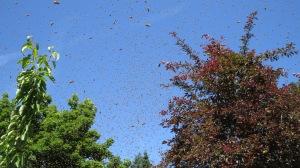 swarm d july 2017