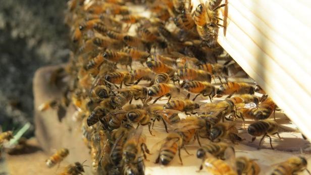 swarm i july 2017