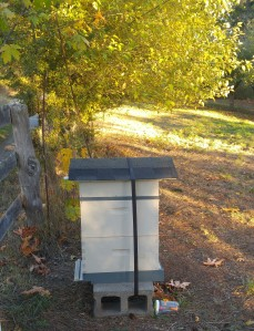 meadow hive in the fall